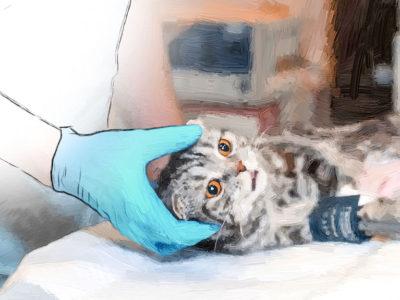 Feline Soft Tissue Surgery