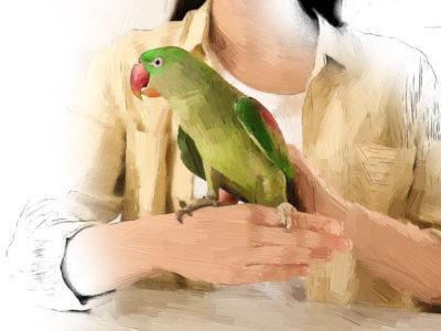 Exotic Pets – Avian Medicine and Surgery I